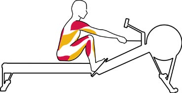 Used Concept 2 Rower >> Complete Muscle Workout Indoor Rowing Concept2 Exercise