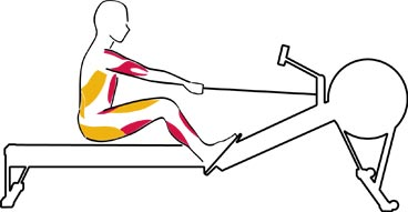 Complete Muscle Workout Indoor Rowing Concept2